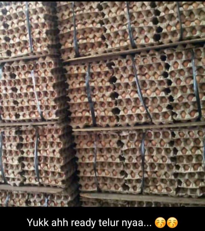 Jual Telur di Bandar Lampung ( Grosir dan Eceran ) Hub