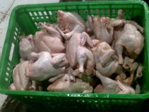 jual ayam potong di bandar lampung,jual ayam di bandar lampung,agen ayam potong di bandar lampung